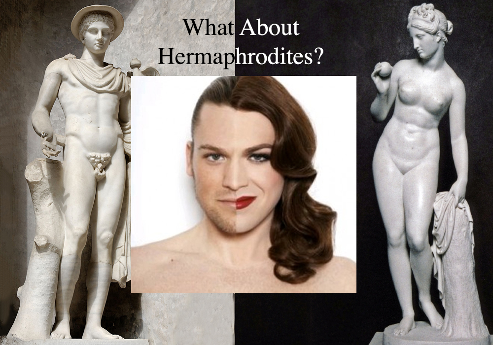 Hermaprodite What to